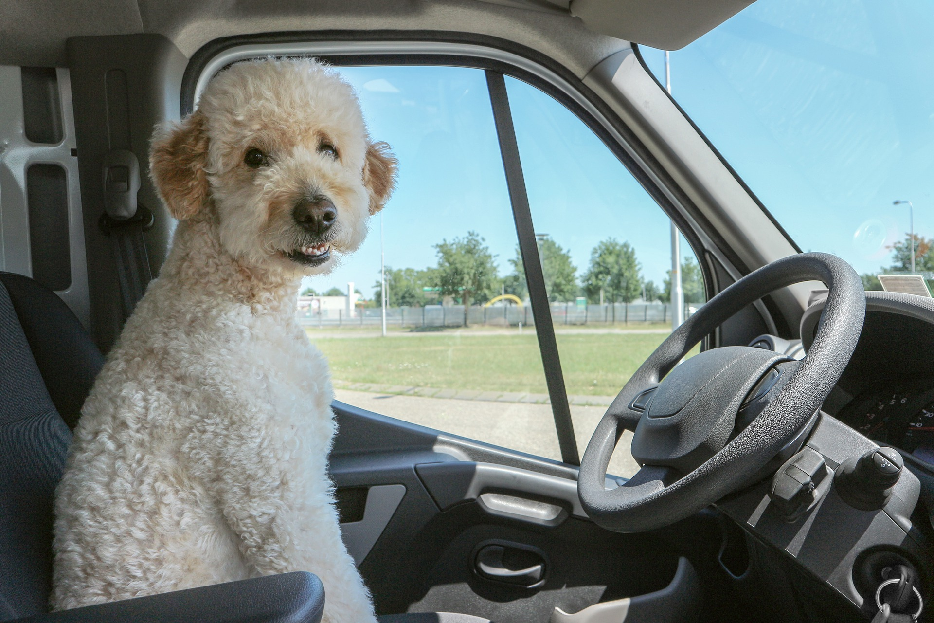viaggio in auto con animali