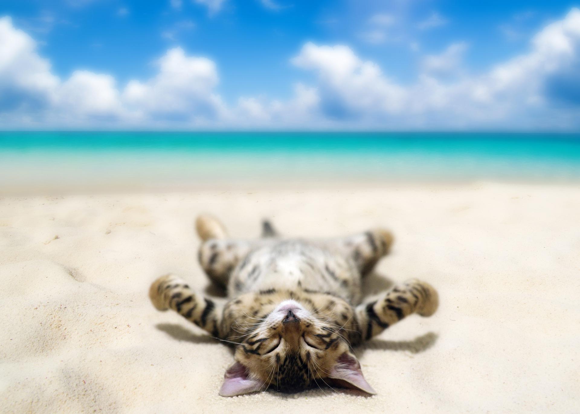 In spiaggia con il nostro animale: dove andare