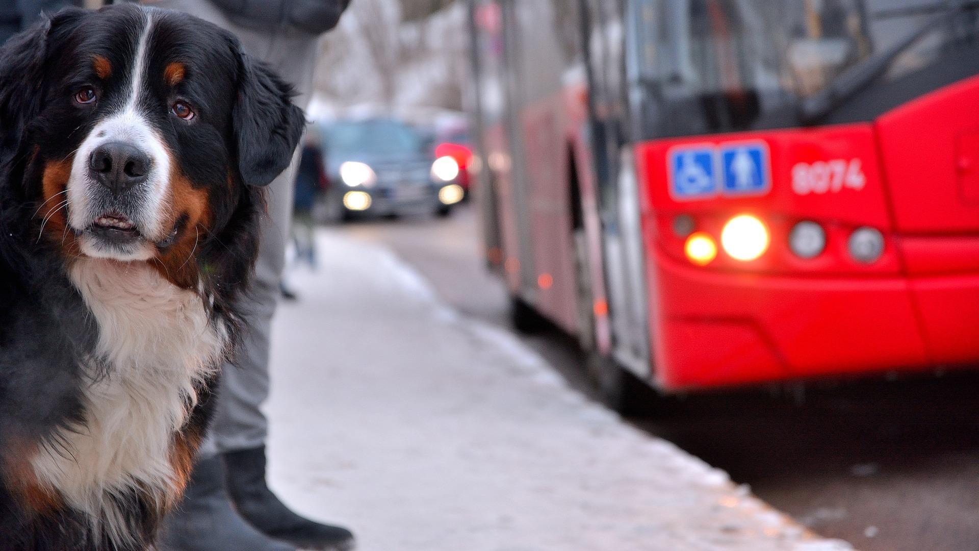 trasportare animali in autobus